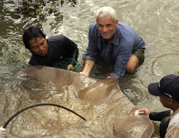 River Monsters - La raie de la mort